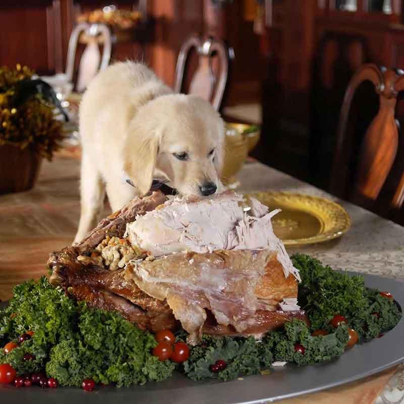 Качествена храна за големи породи кучета