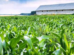 Земеделски новини за фермери от портал Агрозона